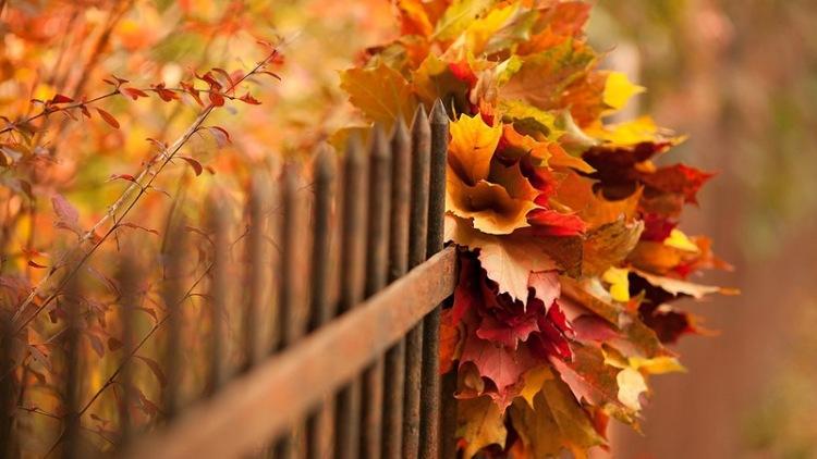 фото осенние листья на прозрачном фоне
