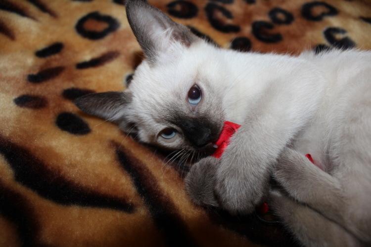 Фото как меняется цвет у котят