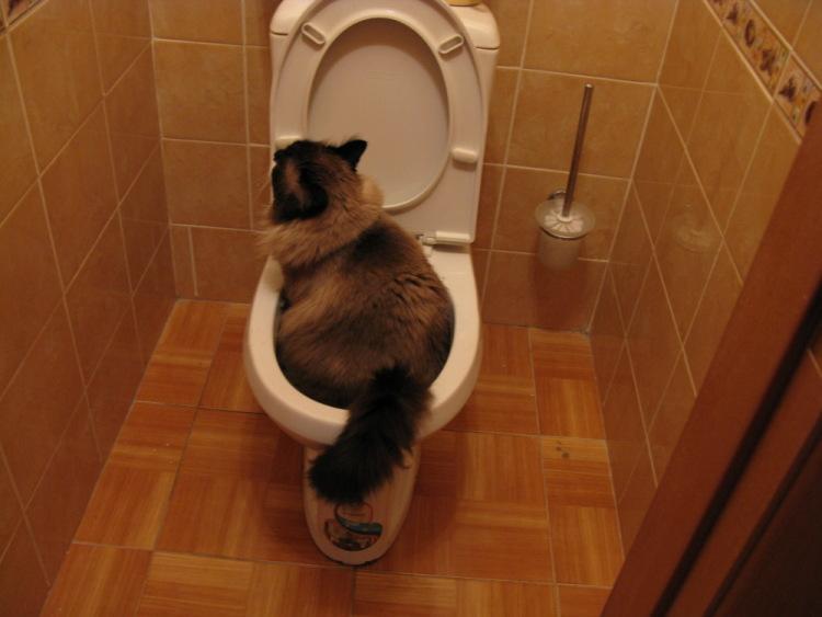 Кошка ходит в туалет в кровать что